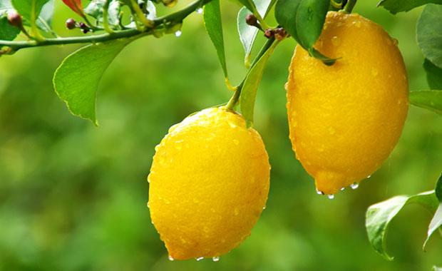 Gebelikte Limonu Eksik Etmeyin ve Pekmezden Uzak Durun